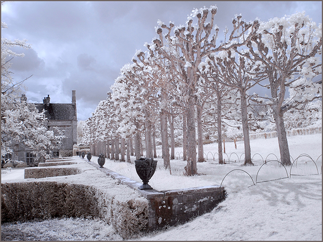Mottisfont Avenue of Trees